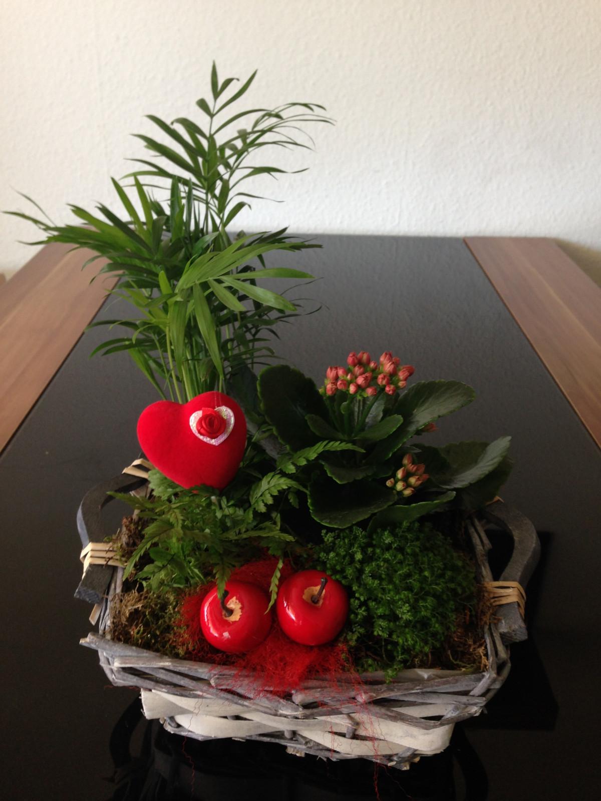 Images gratuites la photographie fleur amour c ur for Plante noel rouge