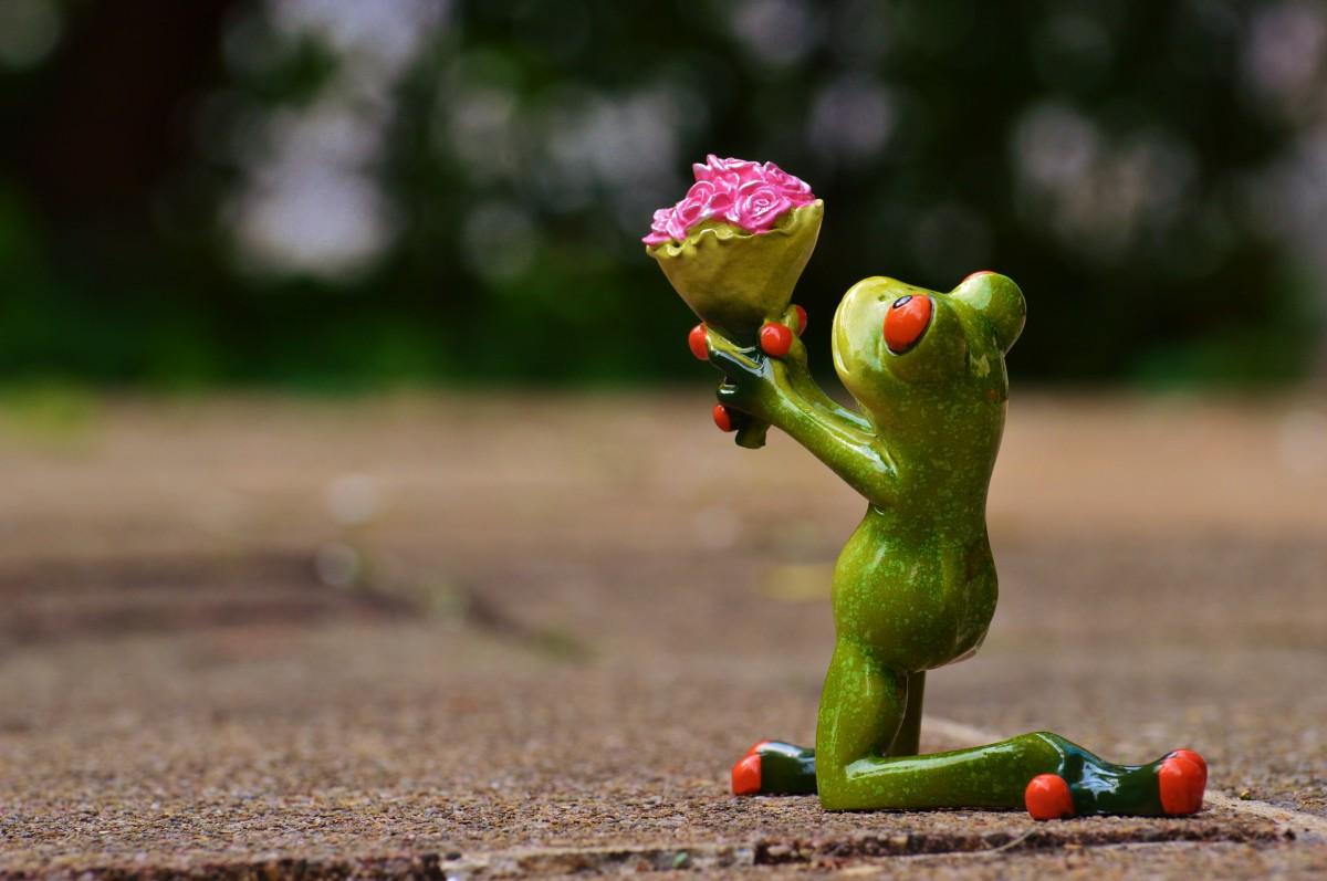 Смешная картинка цветочек, любовь