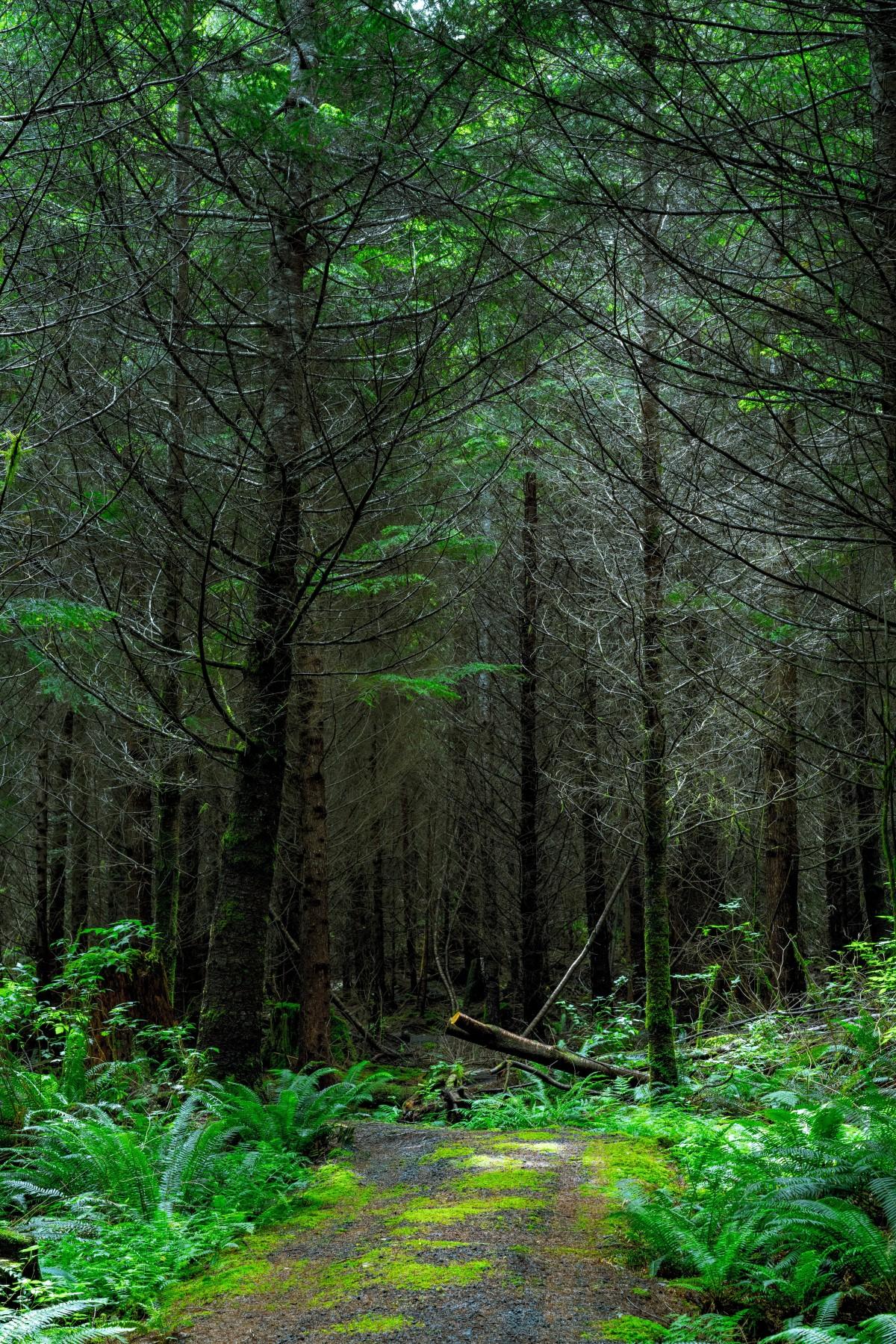 images gratuites arbre la nature r gion sauvage branche plante piste lumi re du soleil. Black Bedroom Furniture Sets. Home Design Ideas