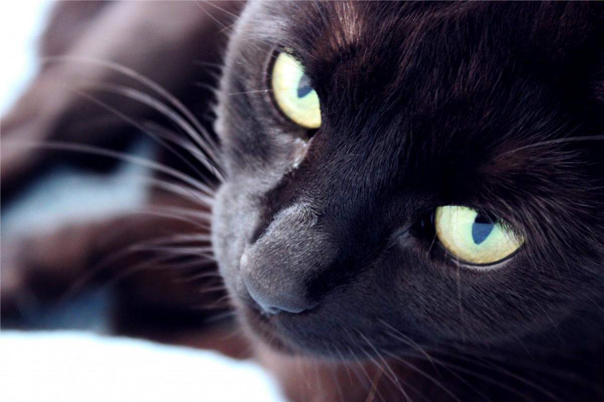 černá kočička šíří obrázky denně zdarma porno videa