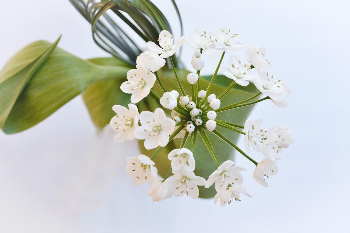 Banco de imagens plantar branco flor ramalhete - Porros de hortensias ...
