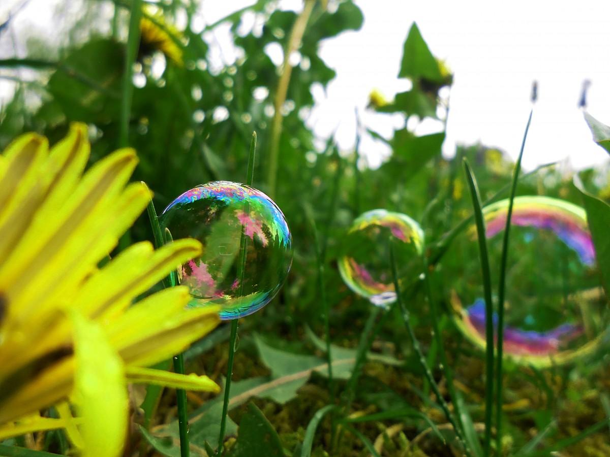 Free images nature lawn meadow sunlight flower pond for Plante 3d gratuit