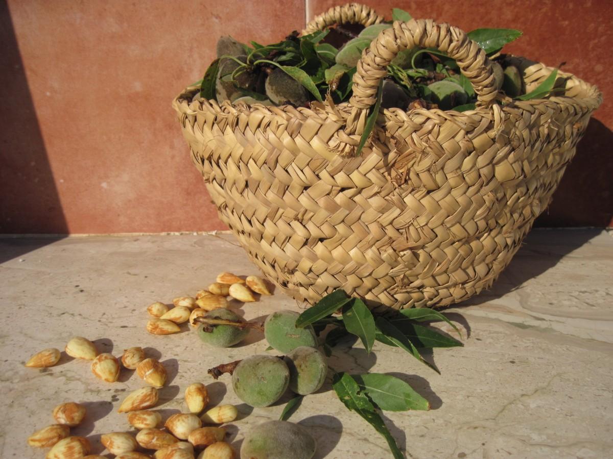 kostenlose foto holz lebensmittel produzieren braun gesund k stlich schale kokosnuss. Black Bedroom Furniture Sets. Home Design Ideas