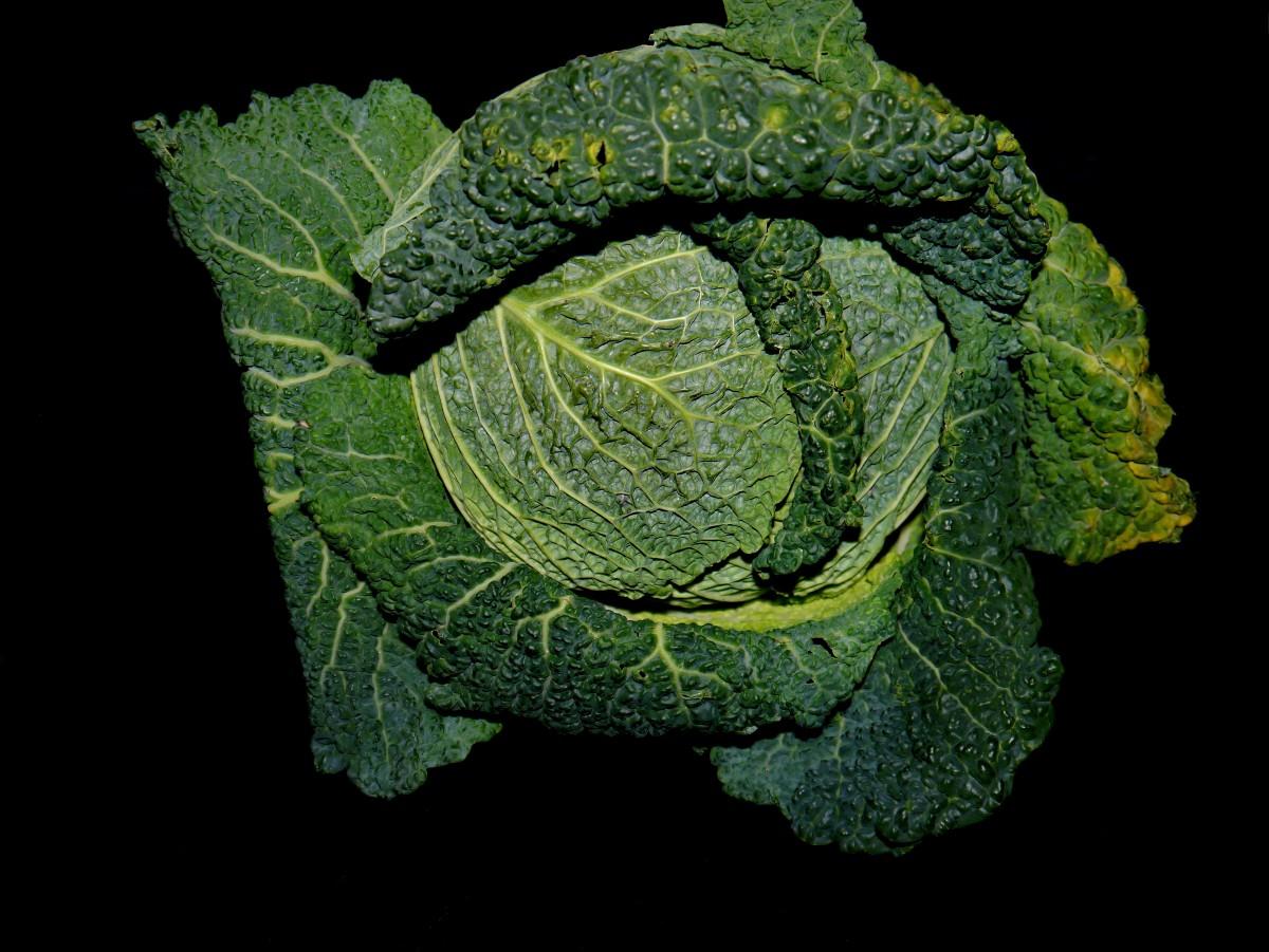 Images gratuites plante feuille aliments vert for Plante 9 feuilles