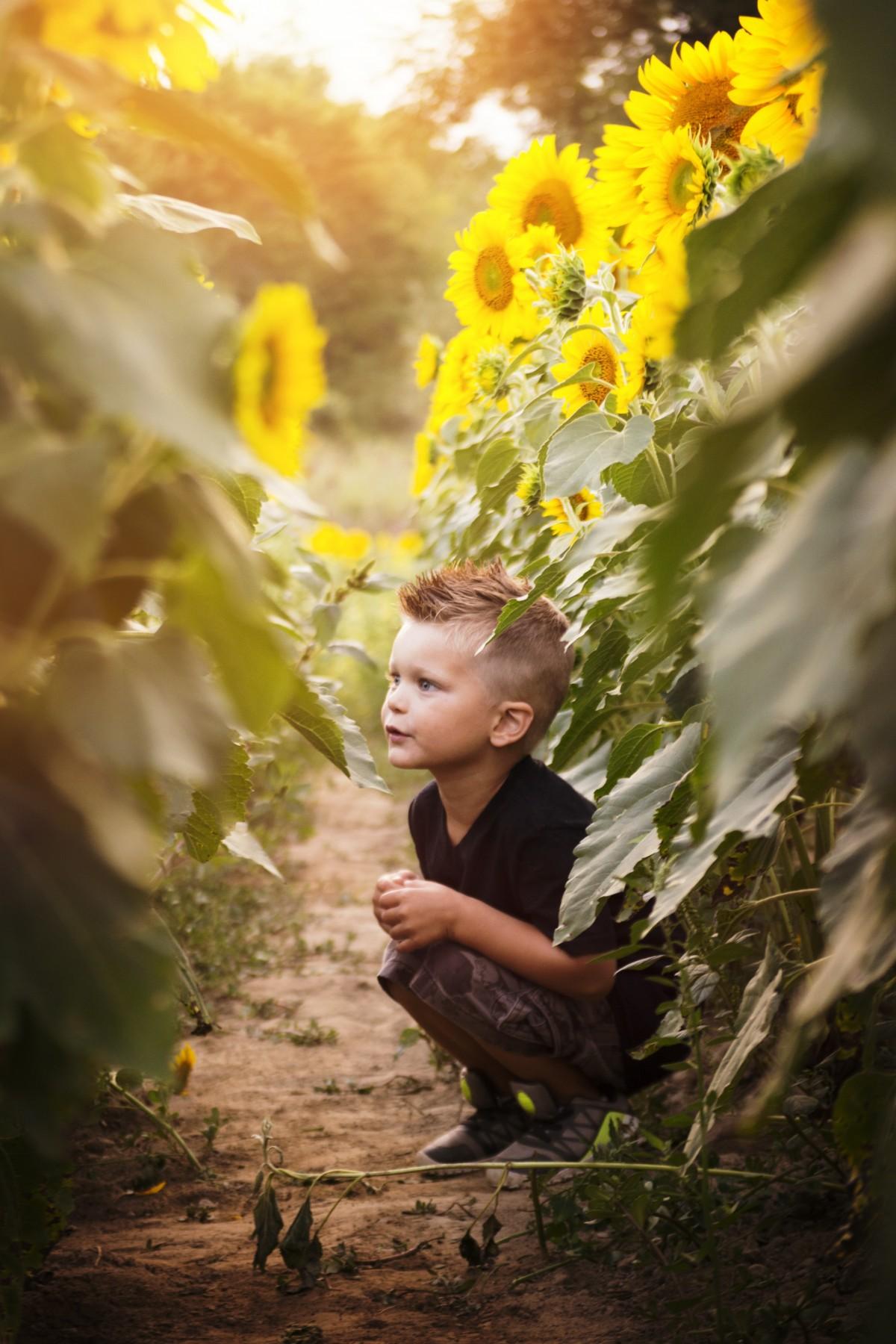 Free Images Sunshine Sun Sunset Field Play Flower
