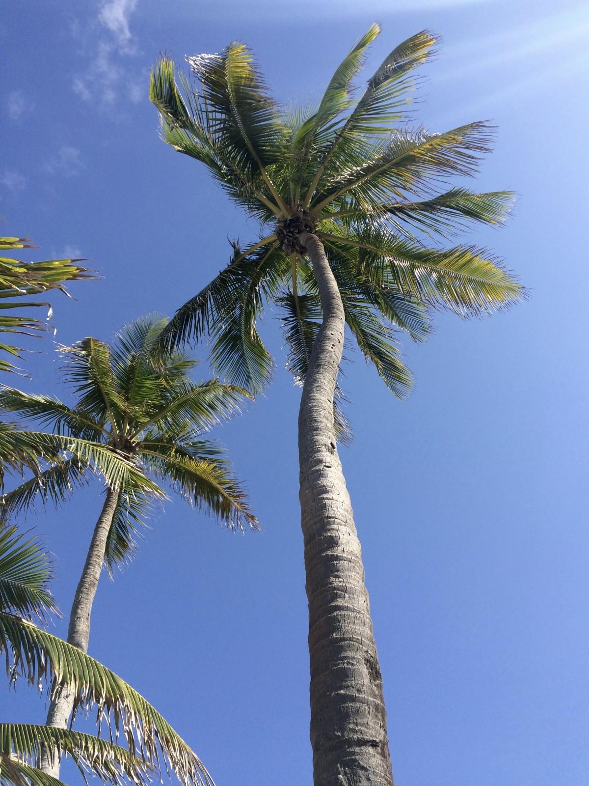 Images gratuites arbre ciel fleur tropical botanique for Plante 9 feuilles