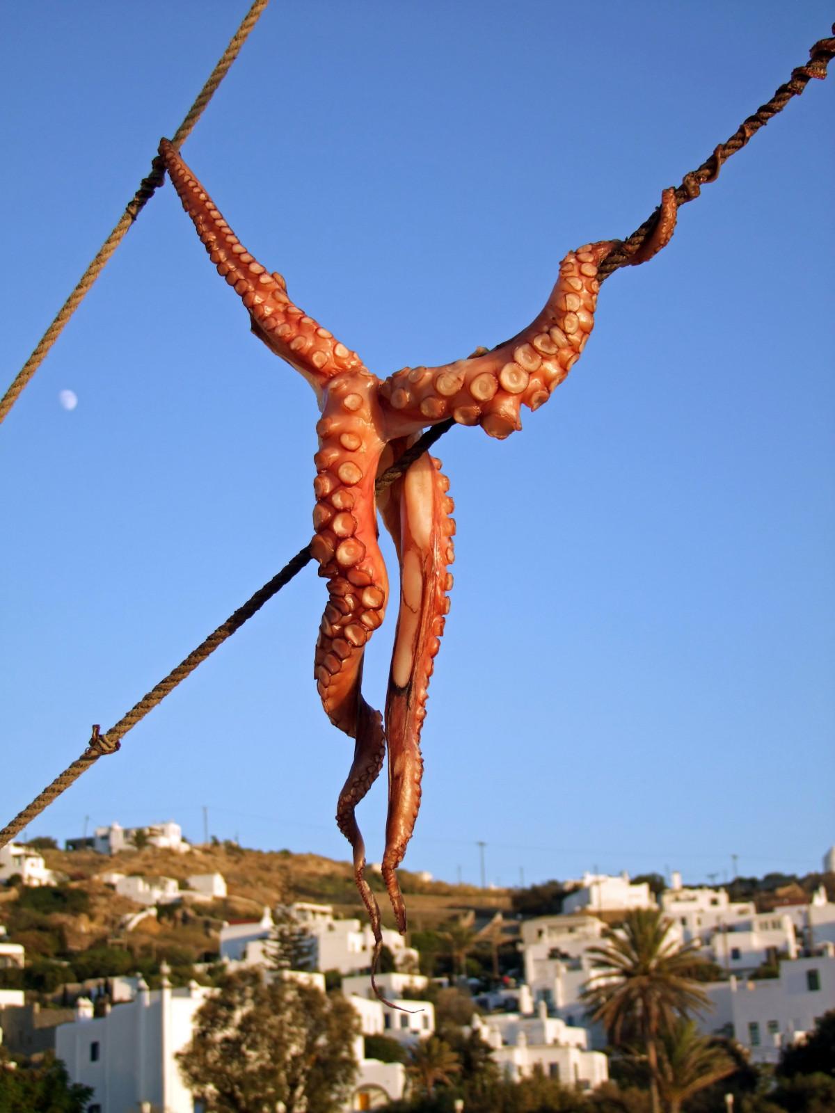 Free Images Tree Monument Dry Statue Fish Squid Octopus