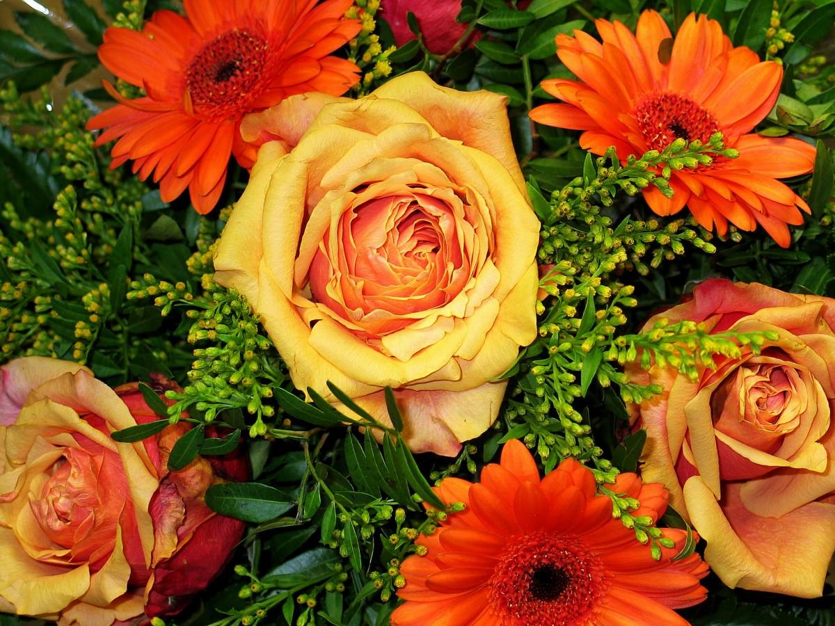 Images Gratuites Fleur Petale Amour Orange Romance Jaune Flore Fleuriste Salutation Florale Des Roses Contexte Gerbera Lie Anniversaire Salutation Carte De Voeux Bouquet De Fleurs Bouquet De Roses Fleuriste Feliciter Bouquet