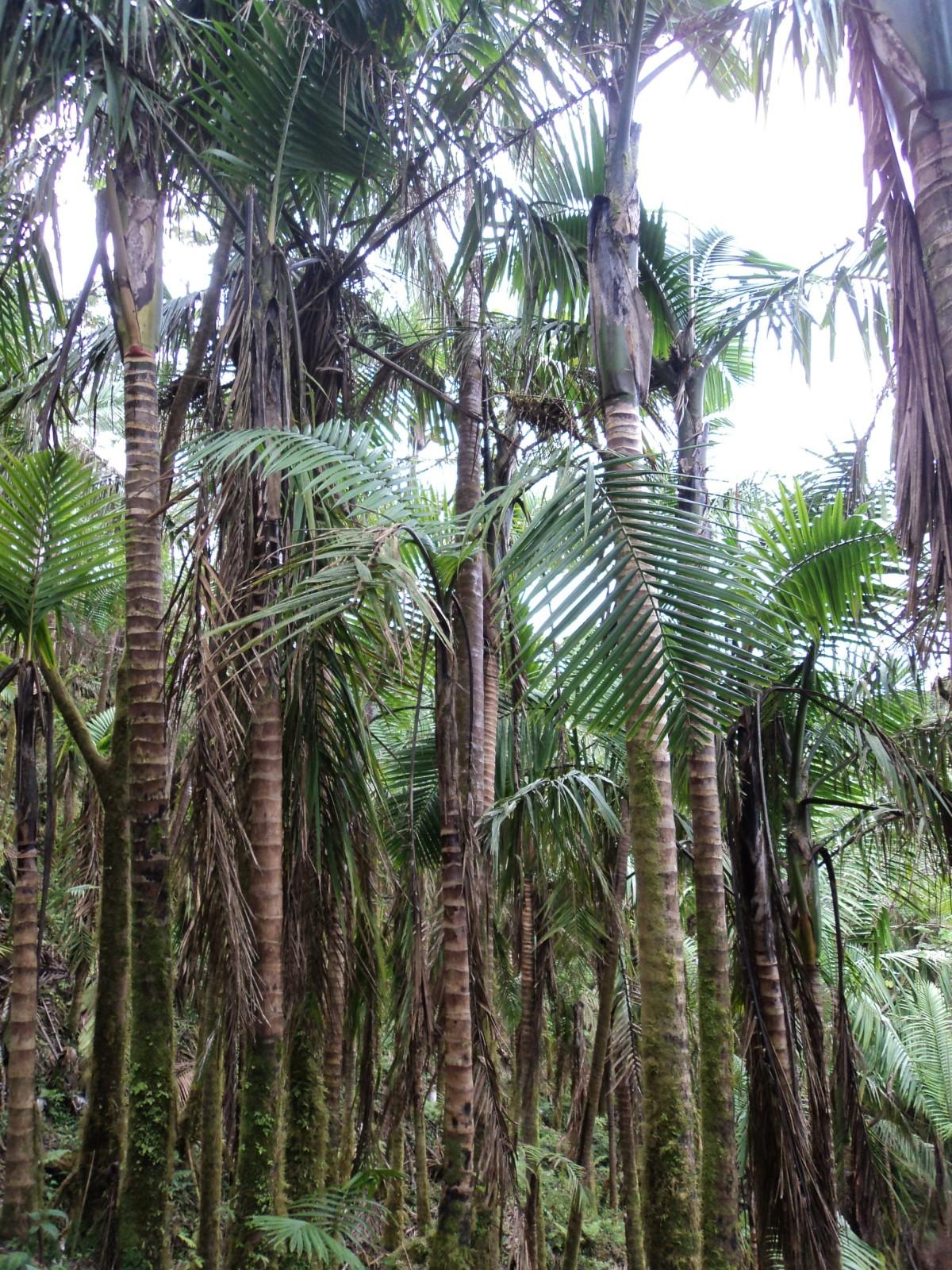 Images gratuites arbre la nature fleur jungle paume for Plante jungle