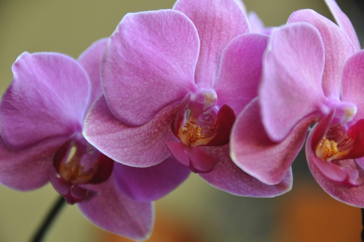 Фото цветов орхидеи в природе