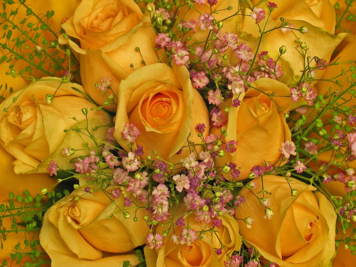 красивые цветочные картинки с поздравлением