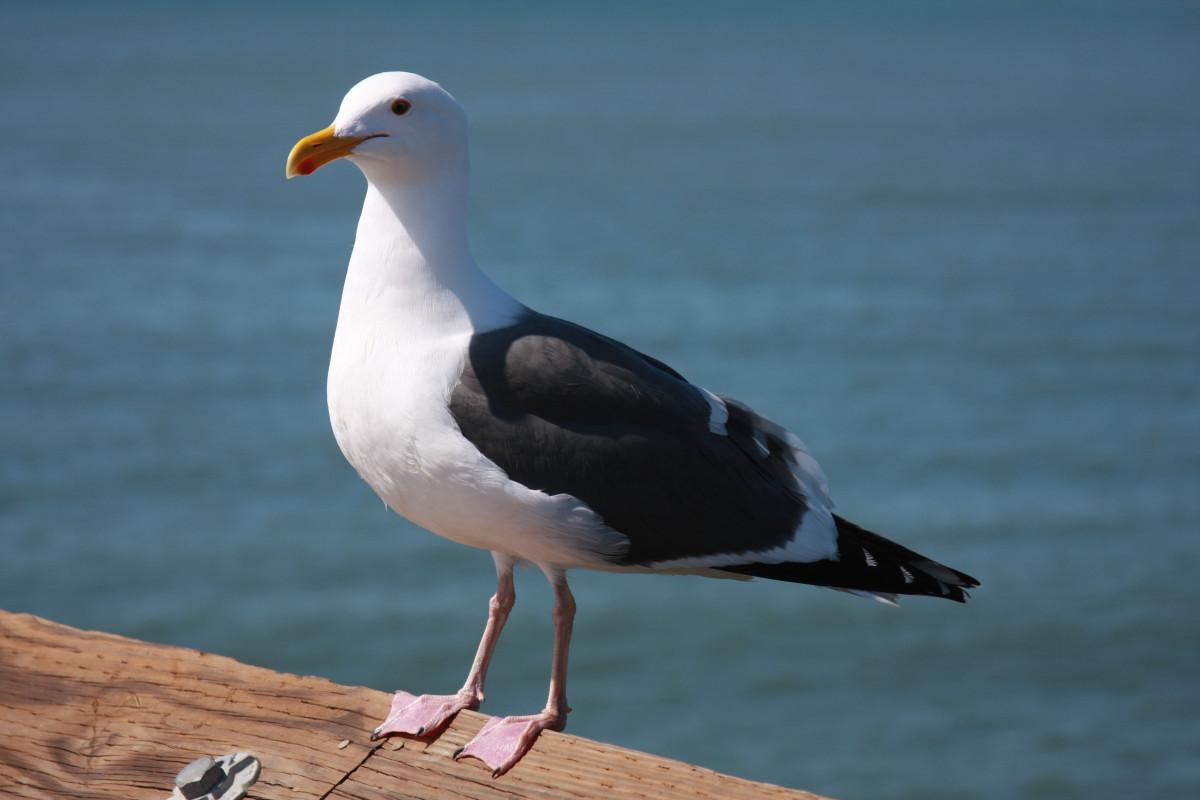 птичка мартын картинки актуальные