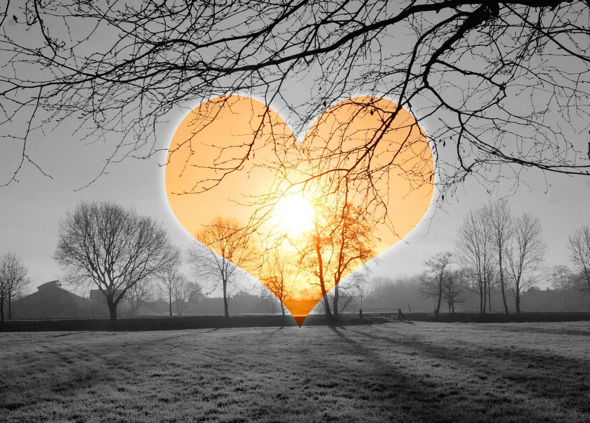 картинки солнечное сердце фермеры