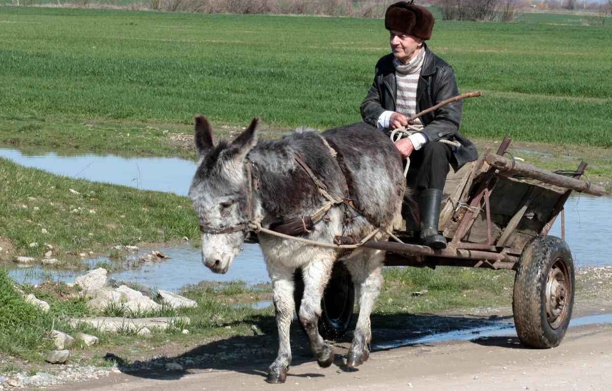 donkey_cart_t_man_water_rural_poor-81725