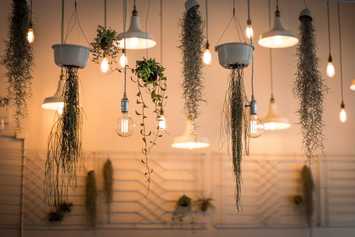 Gratis Afbeeldingen : licht, fabriek, plafond, lamp, verlichting ...