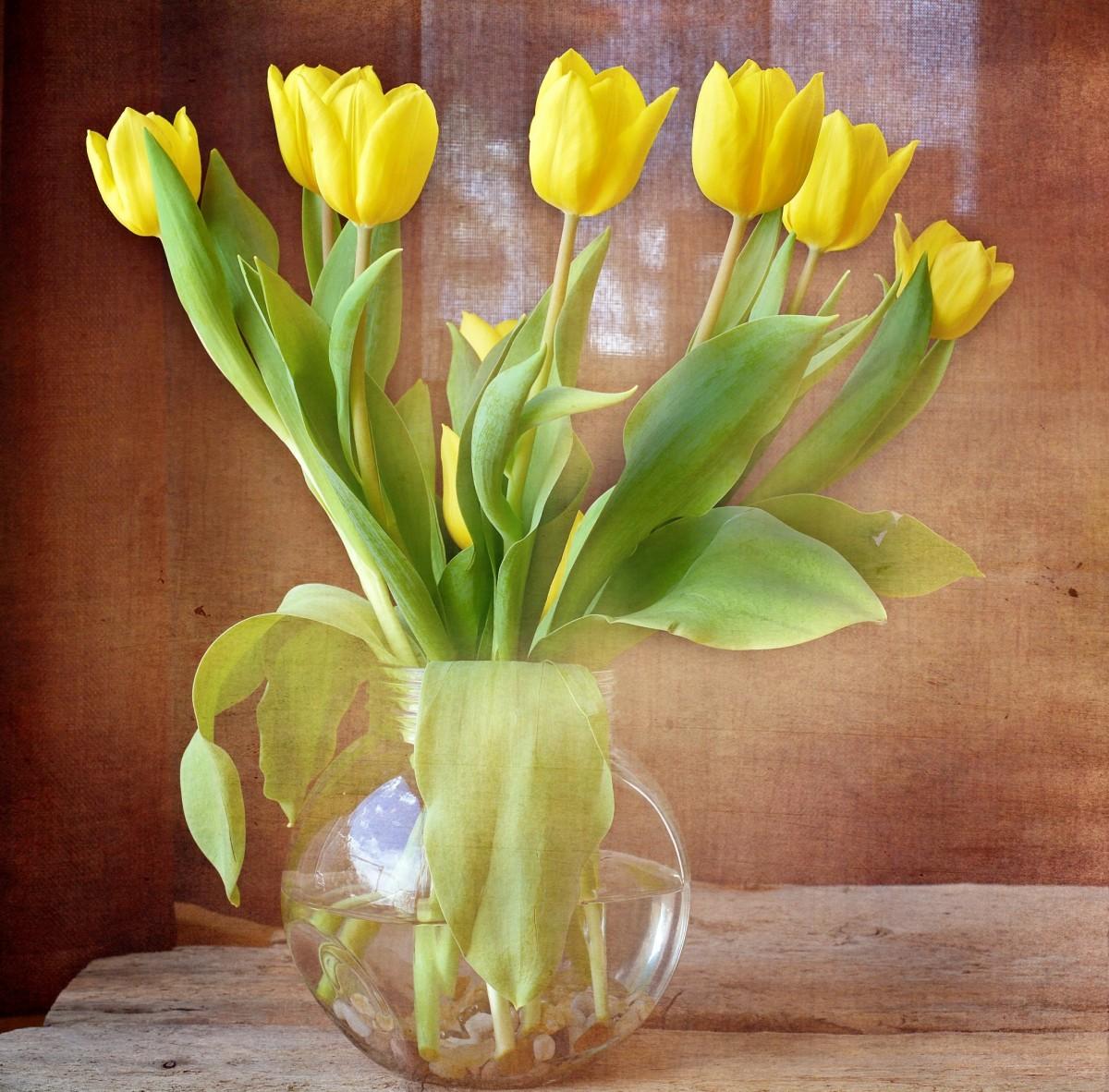 как продлить жизнь тюльпанов в вазе сайте, станете