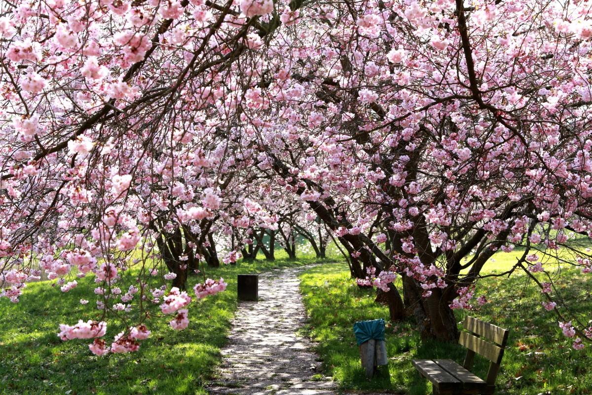 Free Images : tree, branch, flower, bloom, spring, botany ...