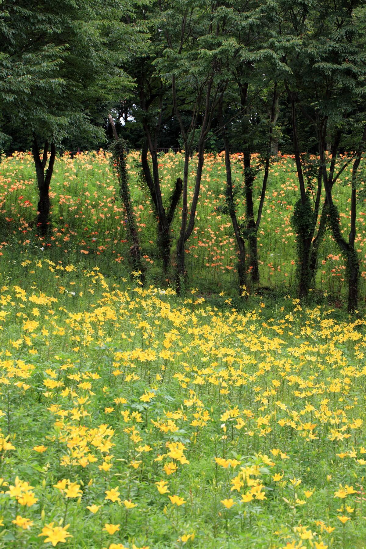 Fotos gratis rbol naturaleza bosque c sped planta for Arboles altos para jardin
