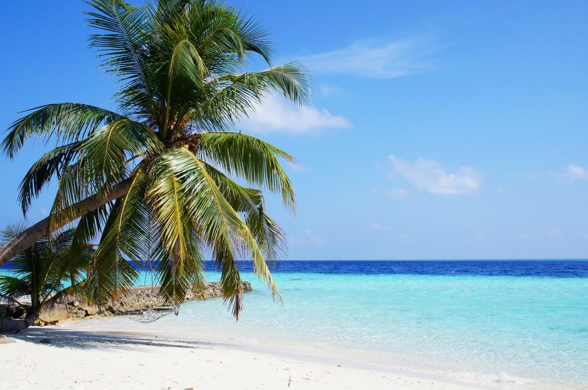 Tropical Paradise Beach Coast Sea Blue Emerald Ocean Palm: Free Images : Beach, Tree, Ocean, Sky, Vacation, Travel