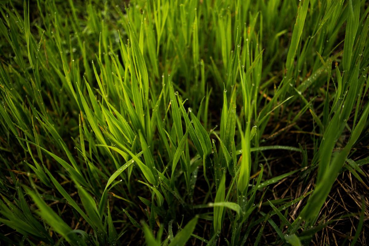 Fotos gratis rbol naturaleza c sped crecimiento - Suelo hierba artificial ...