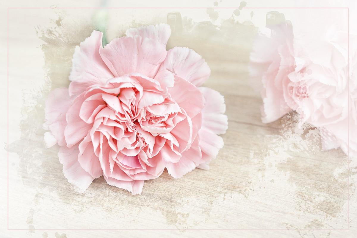 Fotos gratis flor p talo florecer ropa rosado cerca - Cortar hierba alta ...