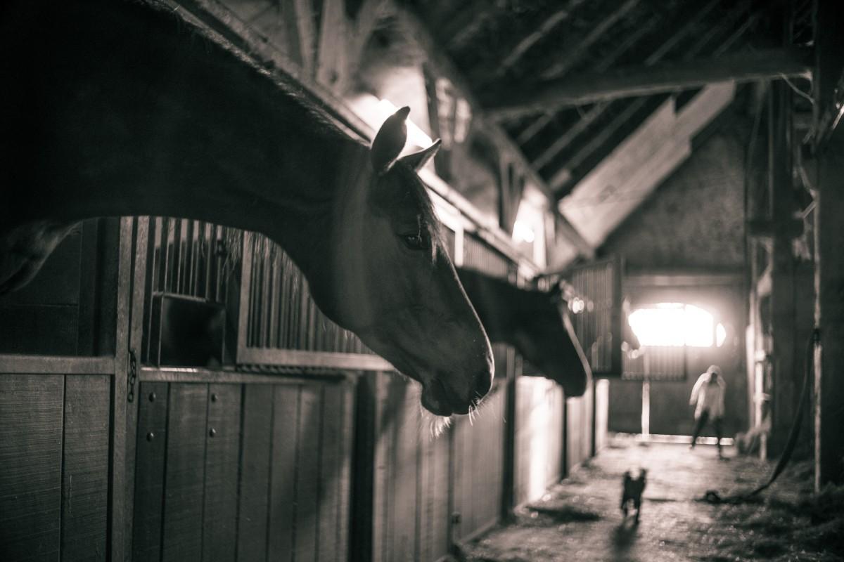 light, night, darkness, black, monochrome, black white, horses, screenshot, horse barn