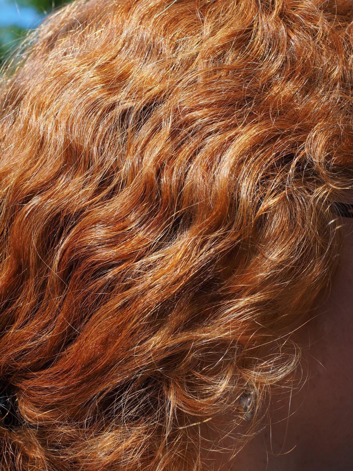Free Images Woman Dark Fur Brunette Hairstyle Long Hair