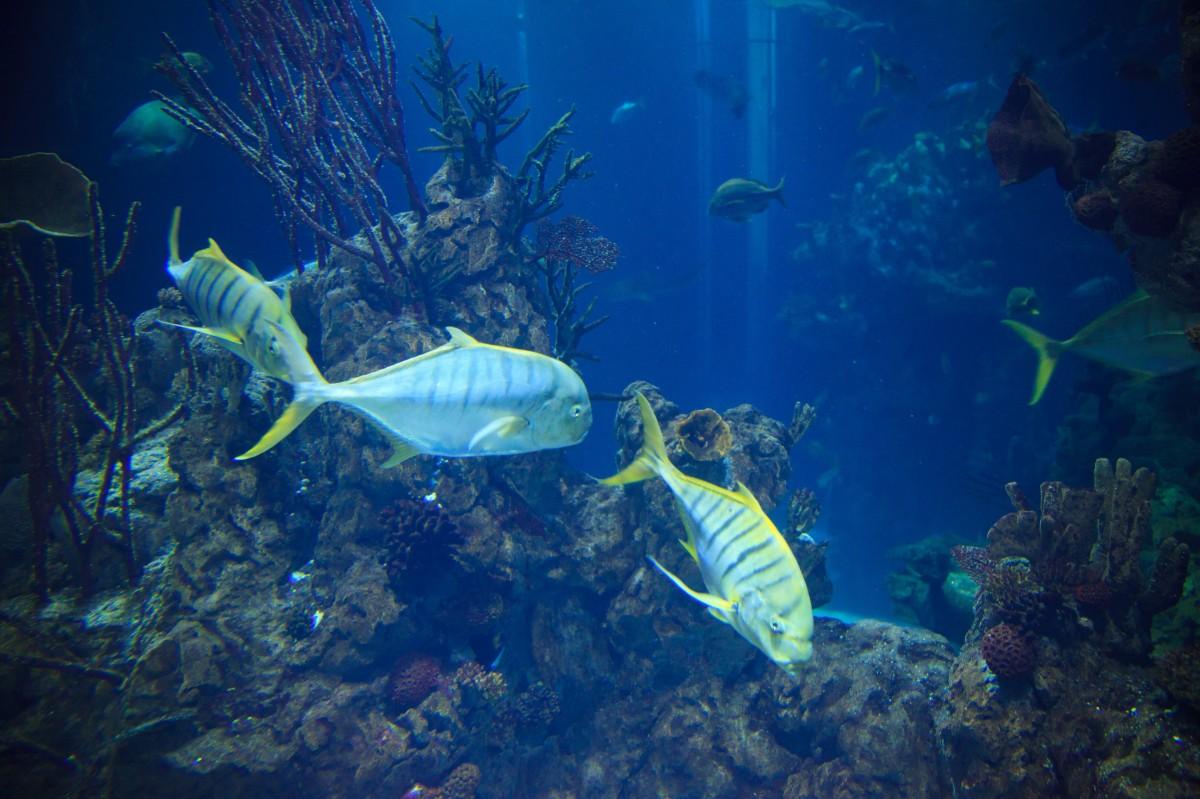 mer eau océan animal plongée sous-marin tropical la biologie bleu poisson corail récif de corail la vie récif des sports aquarium animaux Profond Marin grand exotique sport d'eau plongée sous-marine biologie marine Plongée sous-marine Poisson de récif corail Poissons d'eau profonde