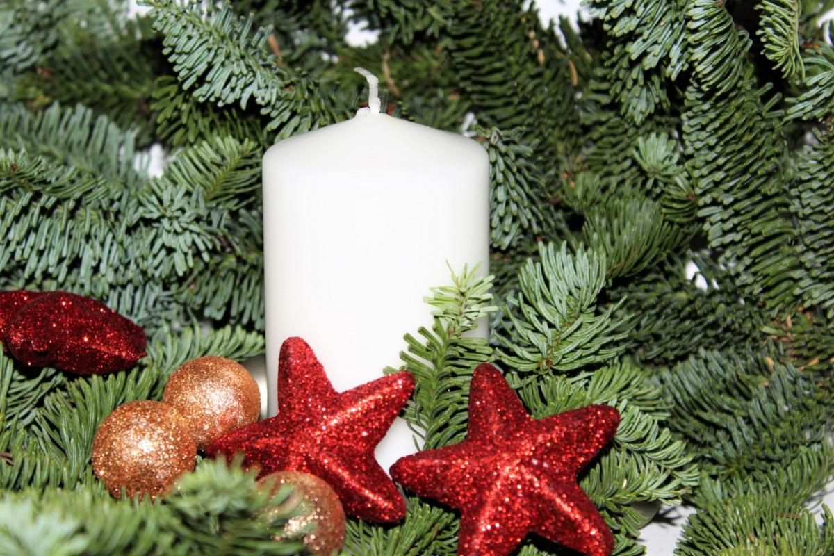 Kostenlose Foto Baum Ast Dekoration Rot Weihnachten