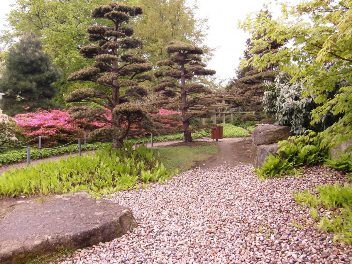 Fotos gratis rbol planta c sped flor bot nica for Plantas jardin japones