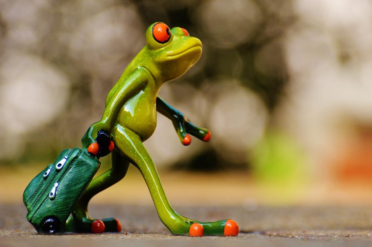 Утро картинки, картинки с лягушками прикольные