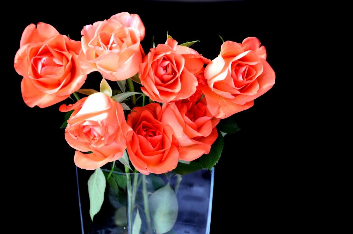 Что делать, чтобы розы дольше стояли: как сохранить розы в вазе 66