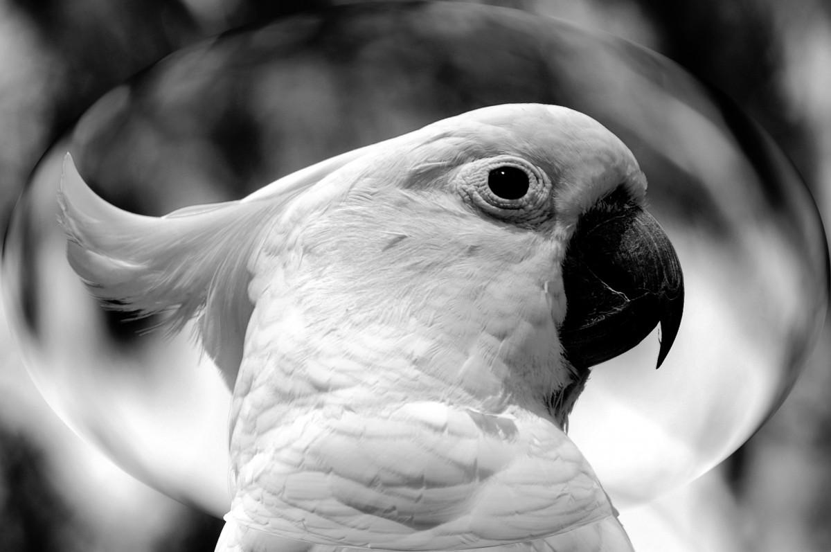 Fotos gratis p jaro ala en blanco y negro fotograf a for Aparador blanco y negro