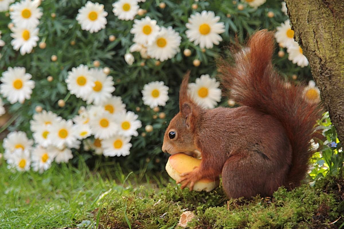 Фото цветы природа животные