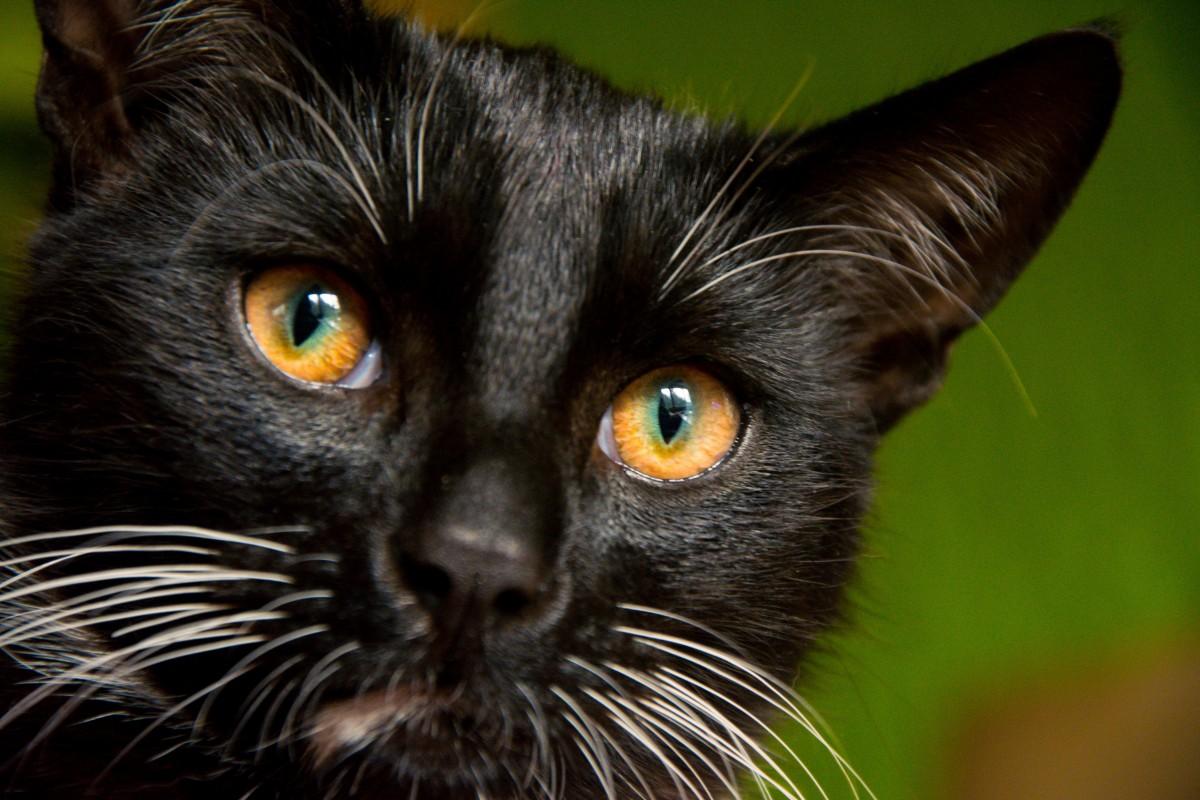 Foto di bella nero micio