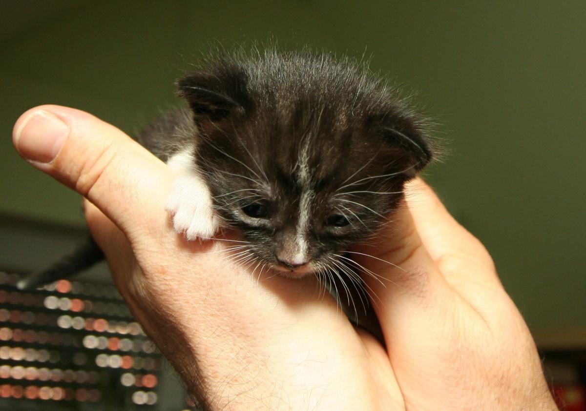 Černá černá mokrá kočička