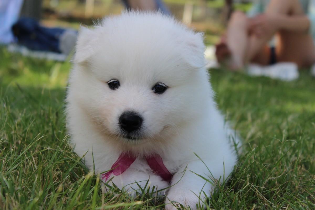 небольшой прихожей картинки с белыми щенками них довольно
