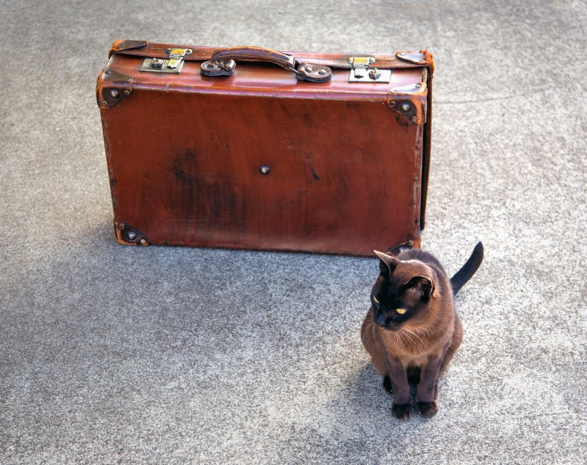 смешные фото с чемоданами знаю может