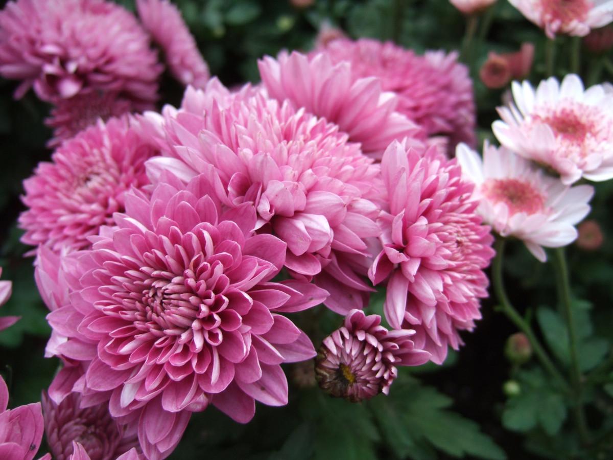 Какие цветы цветут в августе фото