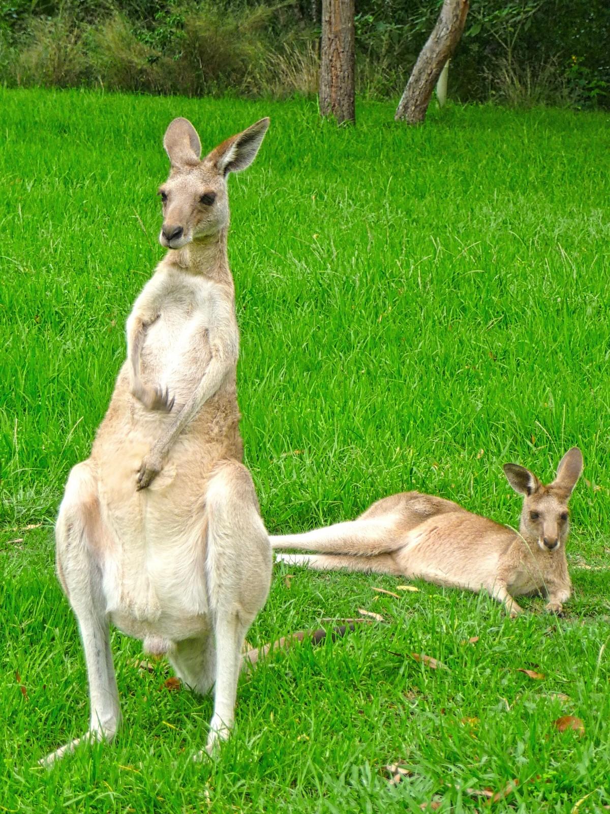 Free male female wildlife standing mammal faun