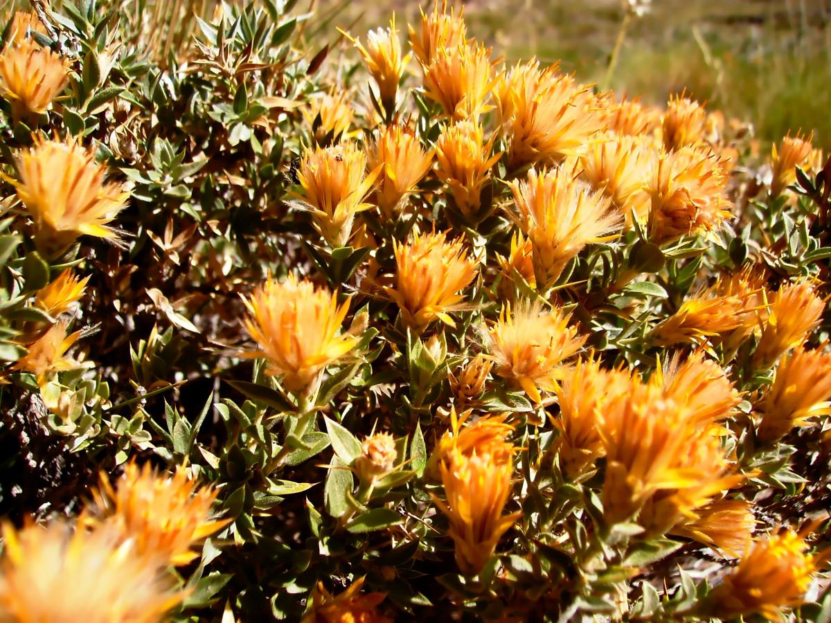 fotos gratis salvaje primavera oto o bot nica flora On arbustos salvajes