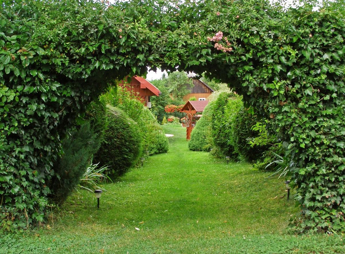 Fotos gratis rbol naturaleza c sped flor callej n for Arboles para plantar en verano
