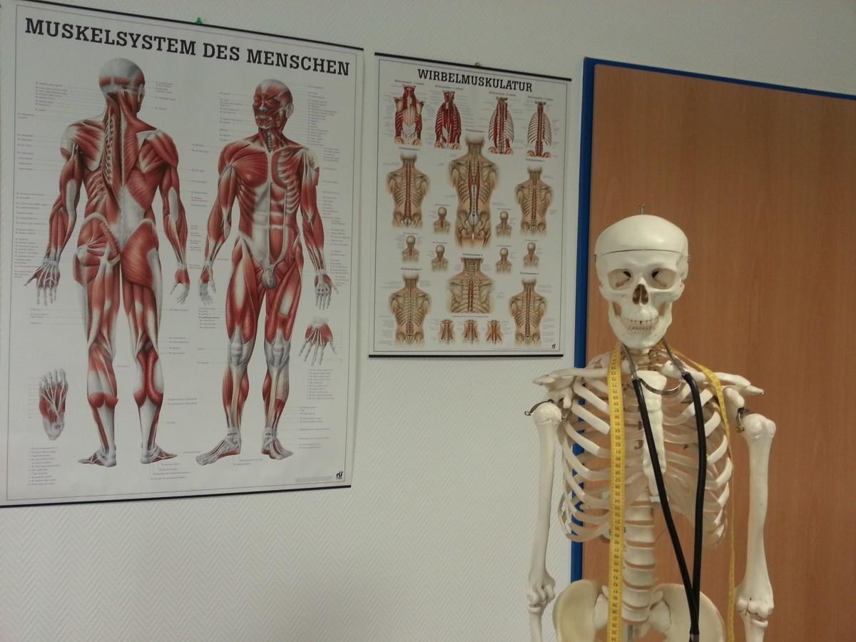 Free Images Painting Human Body Drawing Hospital Skeleton