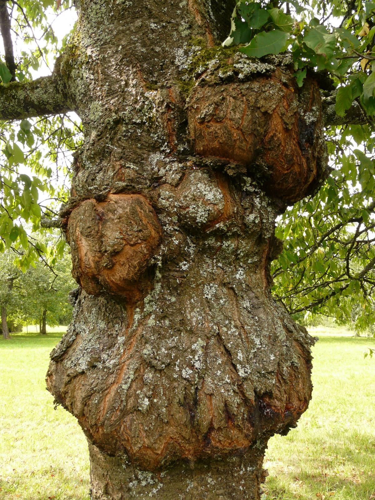 images gratuites arbre plante tronc botanique visage sculpture art des bois souche d. Black Bedroom Furniture Sets. Home Design Ideas