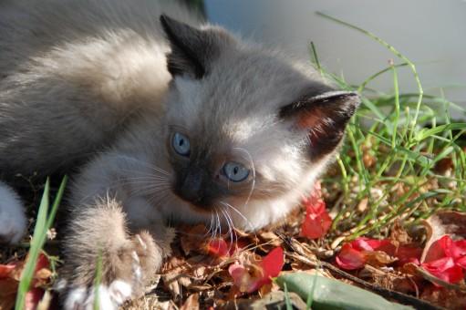 Kätzchen,Katze,Säugetier,Fauna,Whiskers,Tiere