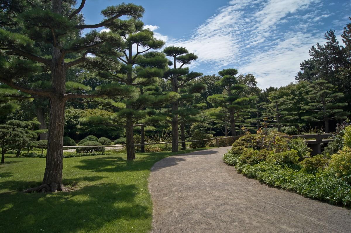 Images gratuites arbre for t piste pelouse vert for Arbres jardin japonais
