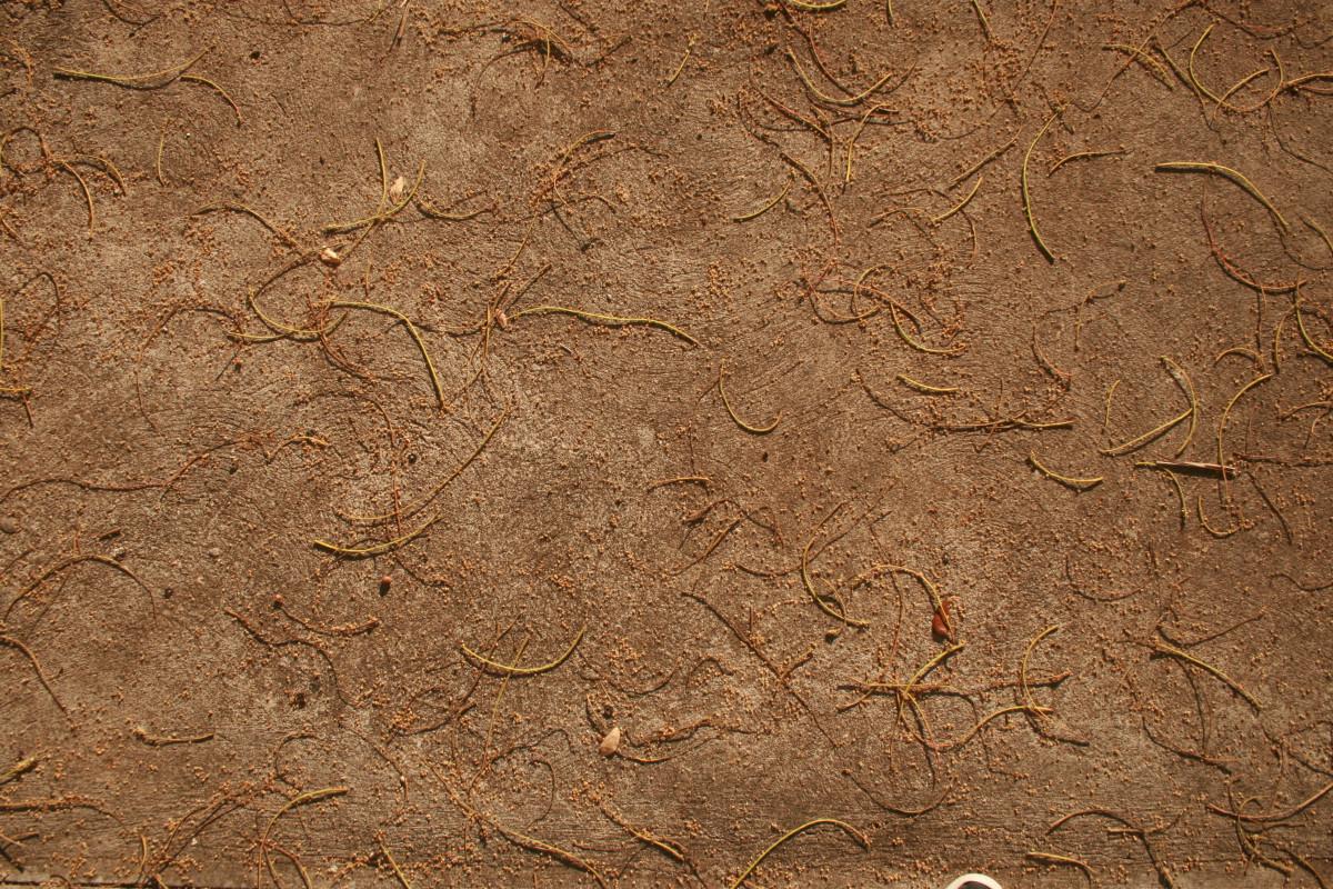 Free Images Sand Rock Wood Texture Leaf Floor
