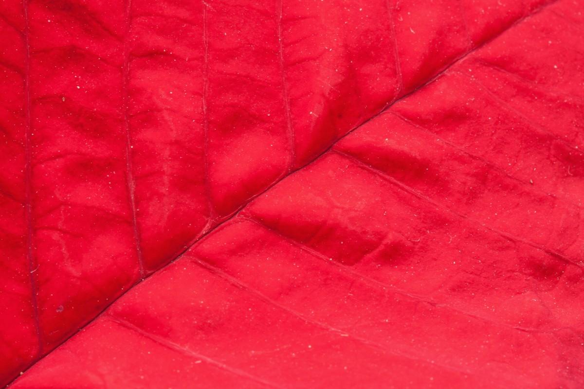 images gratuites la nature texture feuille fleur p tale ligne rouge couleur meubles. Black Bedroom Furniture Sets. Home Design Ideas