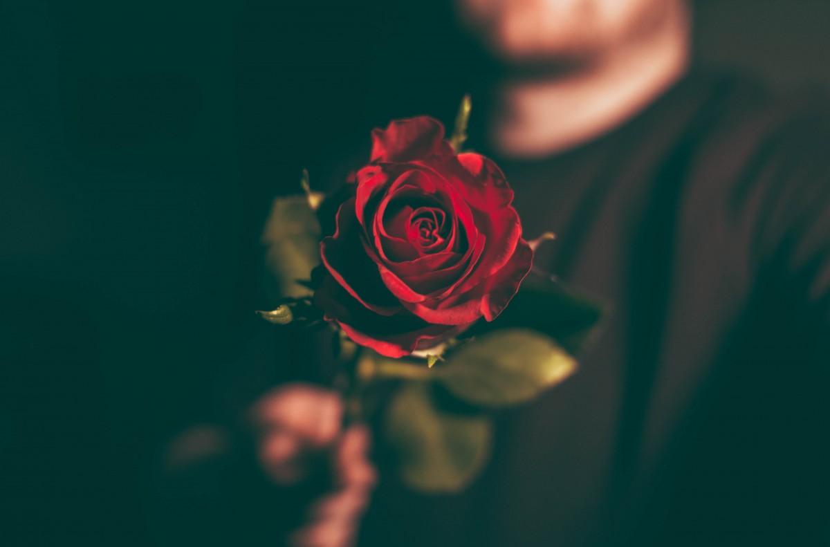 Фото розы 88