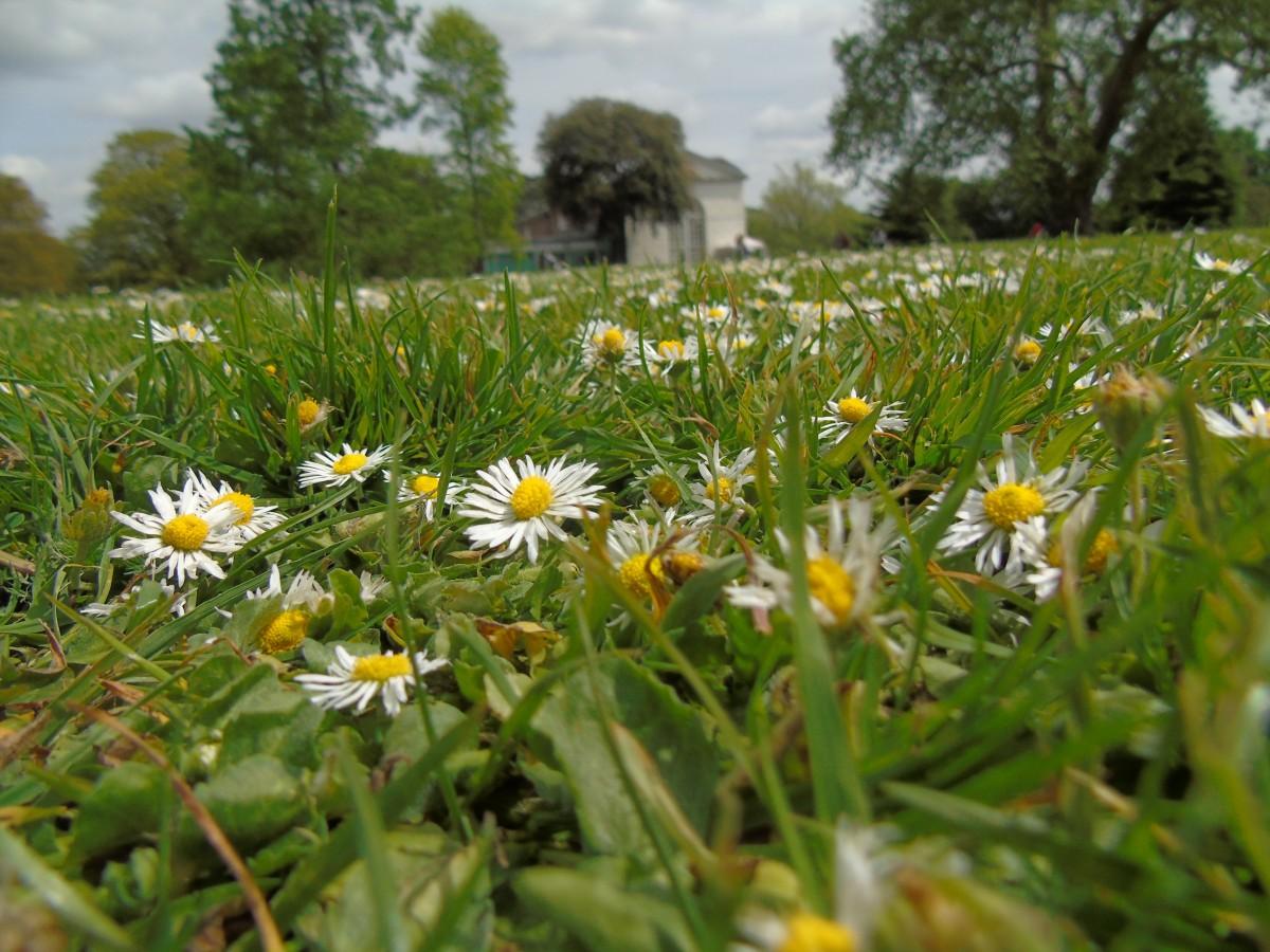 Одинокий цветок картинки